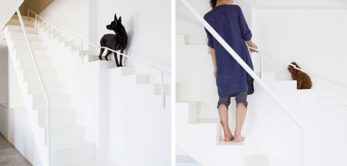 Vietnamese home special staircase for dogs