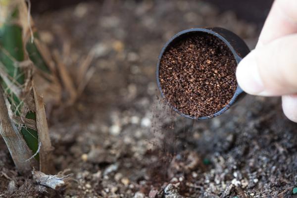 coffee uses (4)