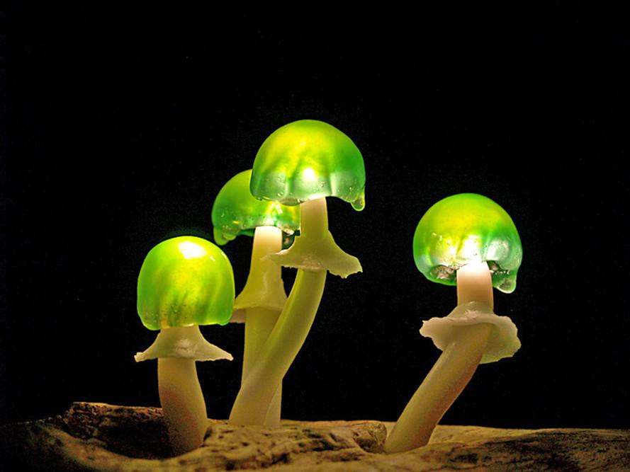 Mushroom-LED-lamp-Yukio-Takano-Great-Mushrooming-12-889x667