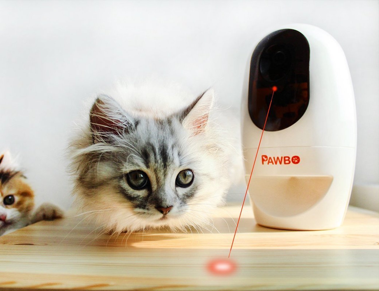 Pawbo-Wi-Fi-Pet-Cam-and-Treat-Dispenser-03