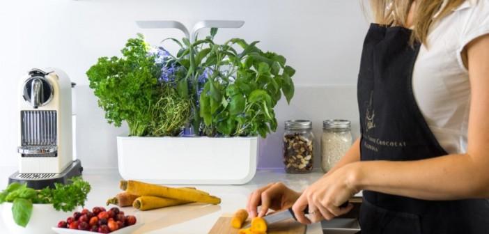 Αυτό το «κηπάκι» μεγάλωνει μόνο του τα λαχανικά σας για 8 μήνες!