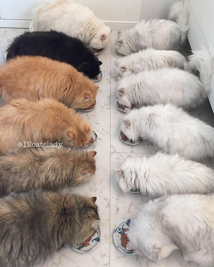 12-cats-lady-1