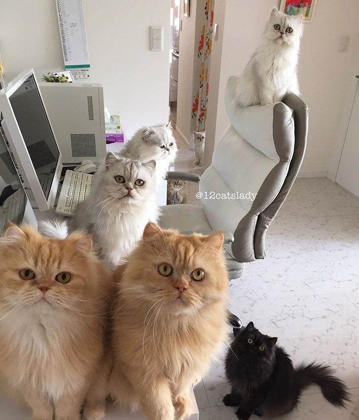 12-cats-lady-3