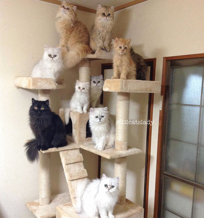 12-cats-lady-4