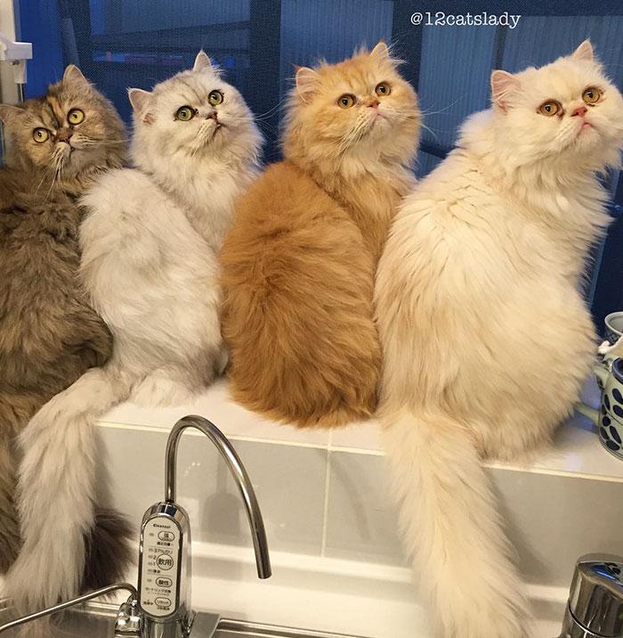 12-cats-lady-5