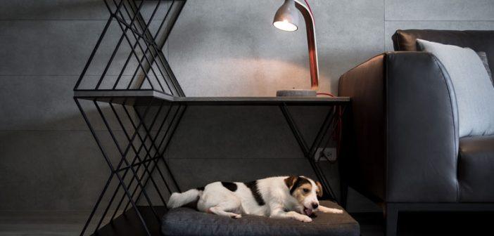Κρεβάτι σκύλου, τραπεζάκι και διαχωριστικό δωματίου όλα σ' ένα!