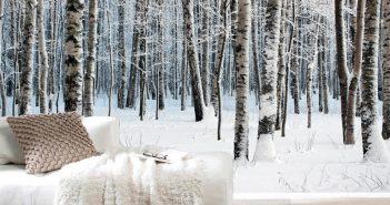 birch_tree_wallpaper-designrulz-2