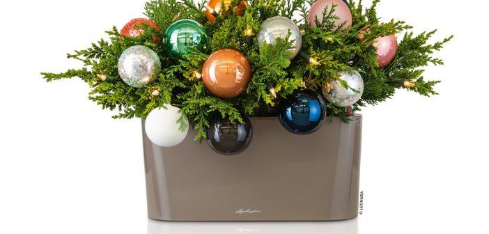 Τα καλύτερα και πιο λαμπερά Χριστούγεννα με την LECHUZA!