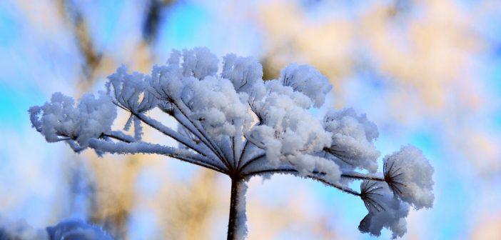 Πανέμορφα λουλούδια που αντέχουν τον χειμώνα – Θα δώσουν χρώμα στον κήπο σου