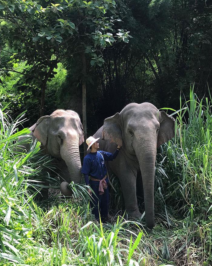 ξενοδοχείο ελέφαντες