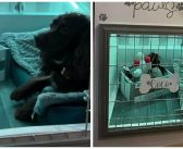Γυναίκα έφτιαξε το πιο όμορφο «δωμάτιο» για το σκύλο της – Το τετράποδο ενθουσιάστηκε!
