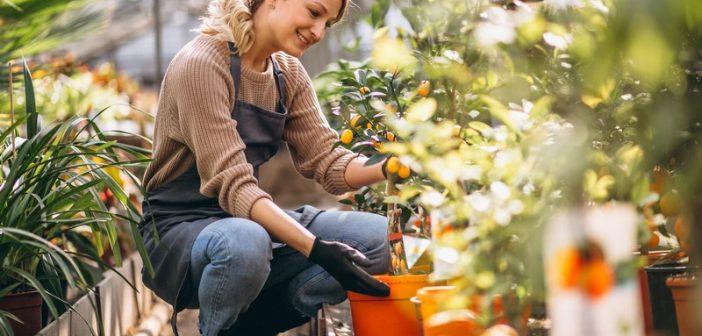 Τέλειος κήπος χωρίς να βάλεις το χέρι βαθιά στην τσέπη